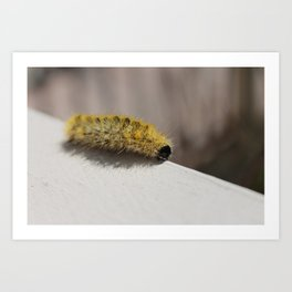 Caterpiller Art Print