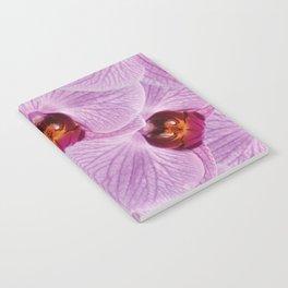 Big Violet Orchid Blossoms Design Notebook