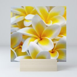 Frangipani halo of flowers Mini Art Print