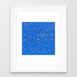 IT'S BIRDS & A PLANE! Framed Art Print