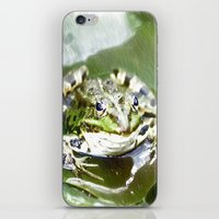 frog iPhone & iPod Skins featuring frog by Karl-Heinz Lüpke