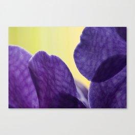 orchid VANDA 93 Canvas Print