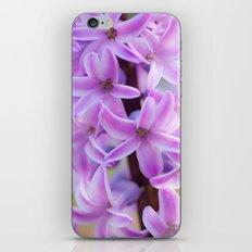 Hyacinthus orientalis 645 iPhone & iPod Skin