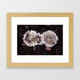 Lichens Framed Art Print