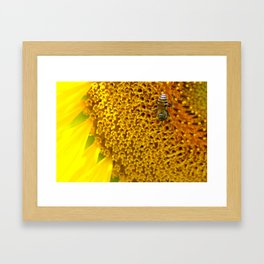 Kansas Sunflower Close up Framed Art Print