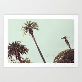 California Palms Art Print