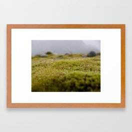 Mossy Wonderland Framed Art Print