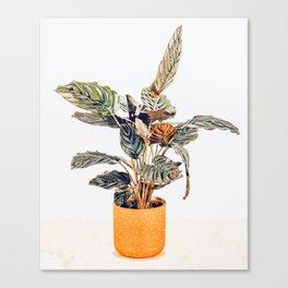 Botany || #illustration #painting #nature Canvas Print