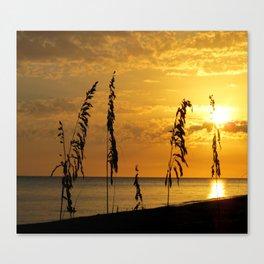 Golden Sea Oats Canvas Print