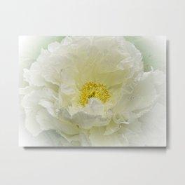 White Peony Tree Bloom Metal Print