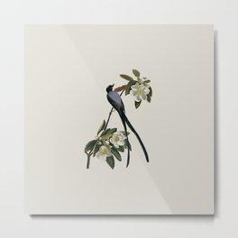 Fork-tailed Flycatcher Bird Illustration Metal Print