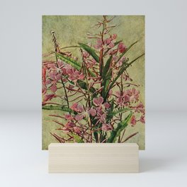 Vintage Print - Birds and Nature (1902) - Sea or Marsh Pink / Fire-Weed Mini Art Print