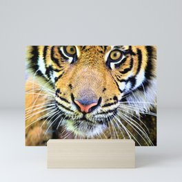 Tiger Magnetism by Reay of Light Mini Art Print