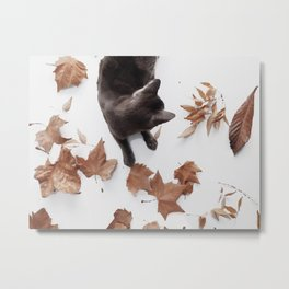 Cat leaves Metal Print
