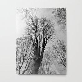 Wilt Beauty Metal Print