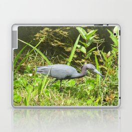 Little Blue Heron in the Glades Laptop & iPad Skin