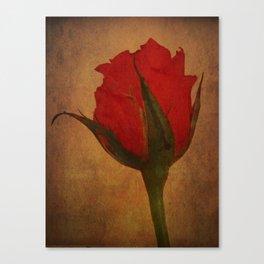 Roseus Canvas Print