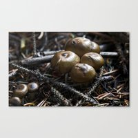 mushrooms Canvas Prints featuring Mushrooms by Kent Moody