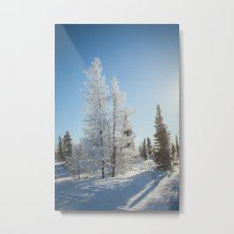 Snowy Tamaracks on a Sunny Day Metal Print