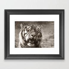 Tiger Cub 1 Framed Art Print