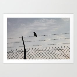 Single Black Bird on a Barbed Wire Fence Art Print