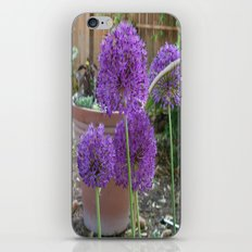 Purple Sensation iPhone & iPod Skin