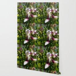 praying lily Wallpaper