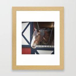 Patriotic Pony Framed Art Print