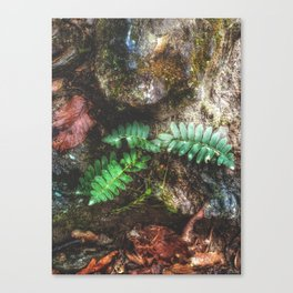Rattlesnake Lodge Ruins Canvas Print