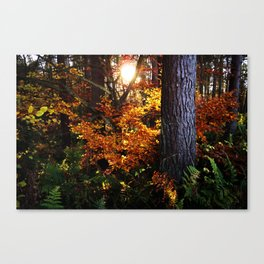 Autumn (in Scotland) Canvas Print
