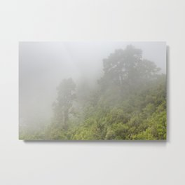 Trees in the mist on La Palma, Canary Islands, Spain Metal Print