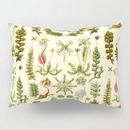 Ernst Haeckel - Hepaticae Pillow Sham