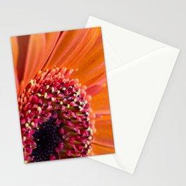 Orange Germini. Stationery Cards