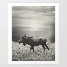Moose Walk  Art Print