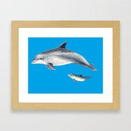 Bottlenose dolphin blue background Framed Art Print