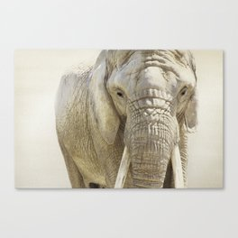 Elephant Photography | Wildlife Art | African | Nature | Animal Canvas Print