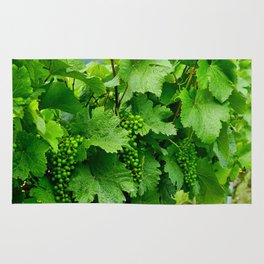 Green Grape Clusters Among the Vines Rug