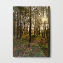 Woods walk Metal Print