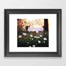 Everything's coming up daisies Framed Art Print