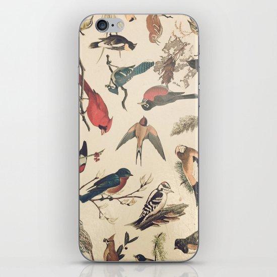Vintage Songbirds iPhone & iPod Skin