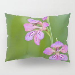 Beauty in nature, wildflower Gladiolus illyricus Pillow Sham