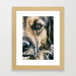 Dog personality Framed Art Print