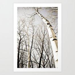 Bareness of Winter Art Print