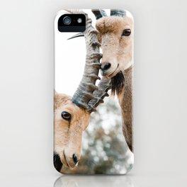Desert ibex iPhone Case