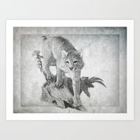 Bobcat in the Woods Art Print