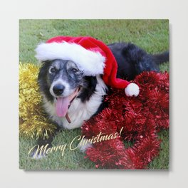 Christmas Wishes From Molly Metal Print