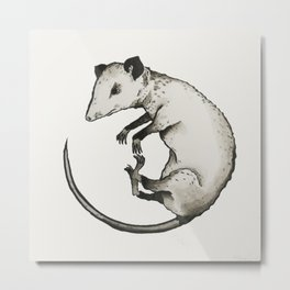 possum Metal Print