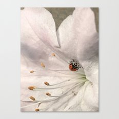 A Little Lady Canvas Print