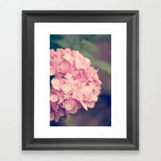 Pink Hydrandgeas Framed Art Print