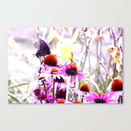 Apex Butterfly Canvas Print